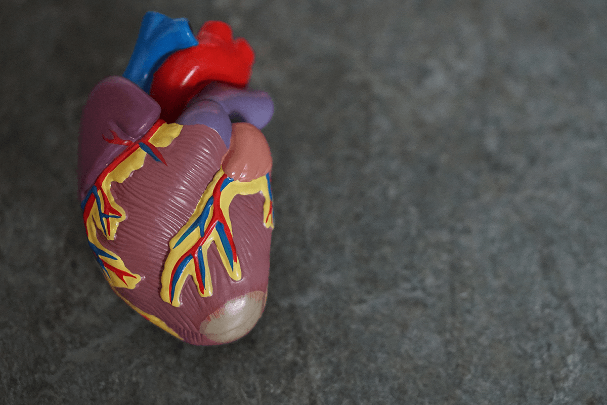 Heart And Gut Health